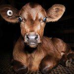 Dominion Tierschutz Dokumentation Review Tiere Titel